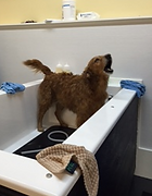 Wash my dog in ct ct give the dog a bath unlimited wash plans solutioingenieria Image collections