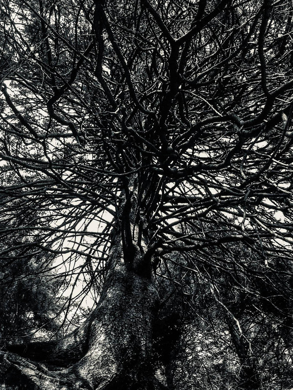 Roots to the sky