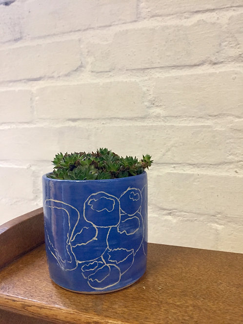 Oyster Funghi Planter