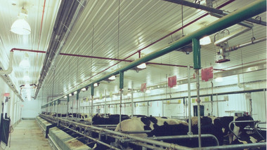 Radiant Tube Heaters in Dairy