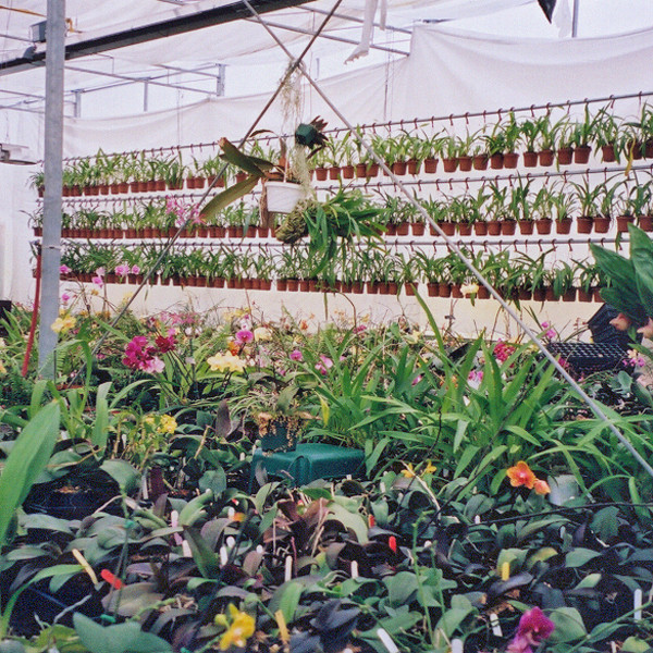 Infrared tube heater in greenhouse