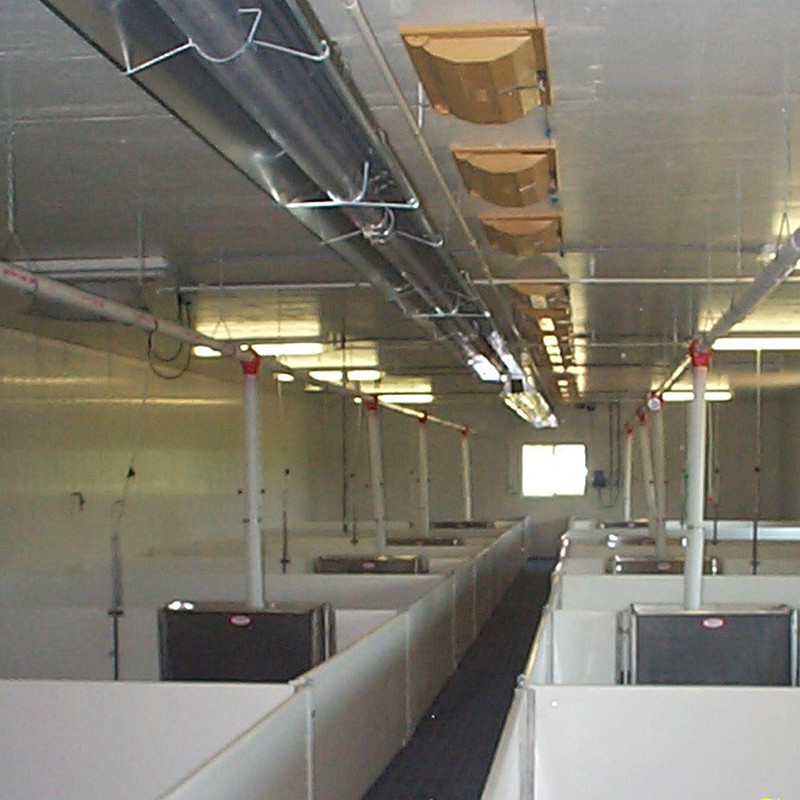 Low ceiling hog production area heated with tube heaters