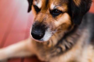 Pets_MichelleBrett_140.JPG