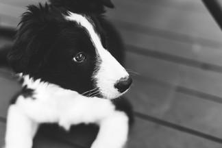 Pets_MichelleBrett_114.JPG