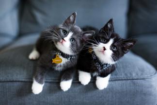 Pet_Joey&Chandler_022.JPG