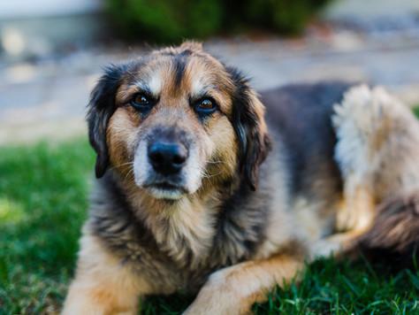 St. Albert Pets - Jesse, Brie + Loki