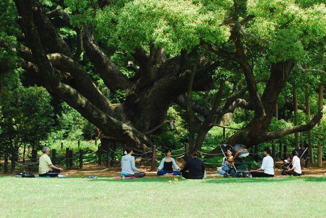 【下関市】5/25 樹齢1000年の大楠の下でヨ〜ガ♪
