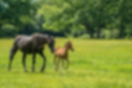 New frest ponie and foal outsideBed and Breakfast in th New Forest National Park