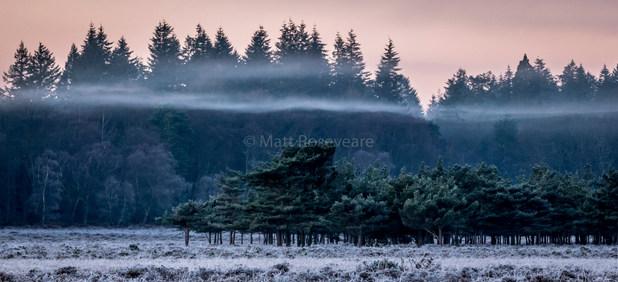 Mist over heath