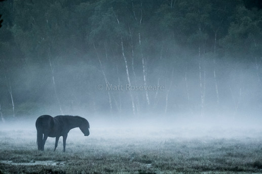 Pony in the mist