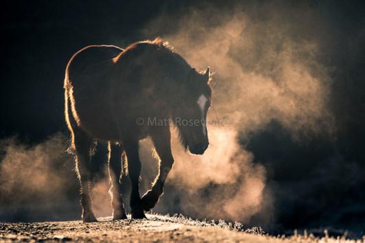Pony at sunrise