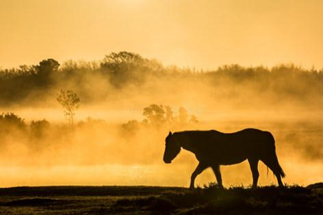a walk at sunrise