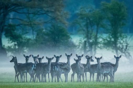 under a blanket of mist