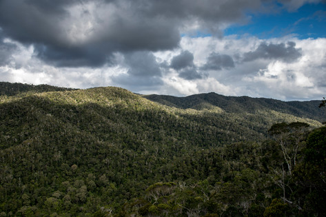 Maromizaha Forest