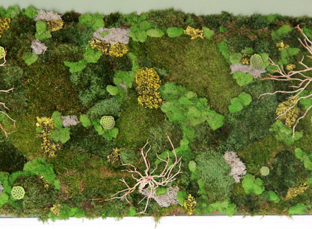 Why Moss Walls? The Craze and Functionality