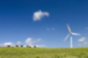 Cows grazing next to a wind turbine.jpg
