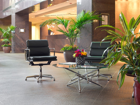 Greening the Workplace – Positive Effects of Plants in the Office