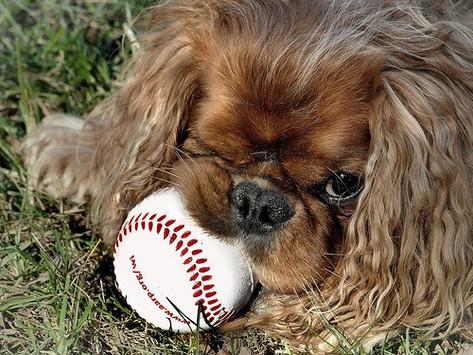 Dog-Friendly MLB Games for the 2020 Season