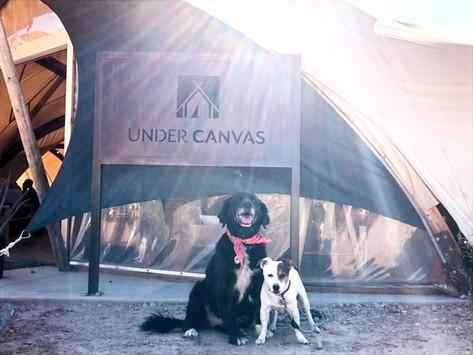 Pet Friendly Resort: Under Canvas Zion