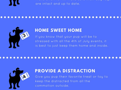 Keep Fido Safe   4th of July Safety Tips