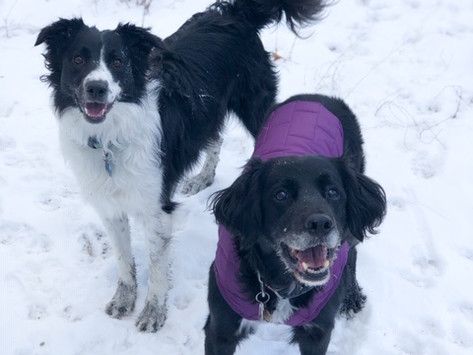 Dog Tips   Winter Hiking with your Dog