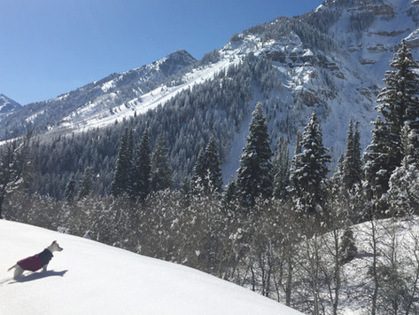 Dog-Friendly Utah | Winter Hikes