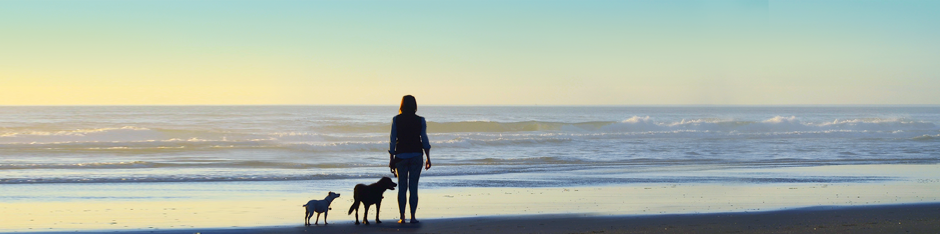 Tail Traveler - Oregon Coast