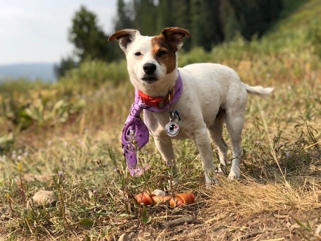 Gracie and her bone