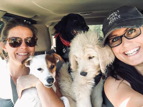 Dog Friendly Utah: Exploring Zion National Park Area