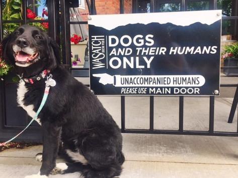Dog-Friendly Salt Lake City: Restaurant and Bars