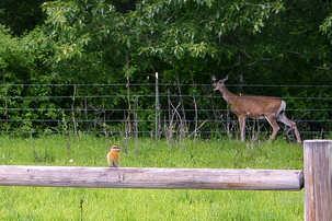 deer & bird-1.jpg