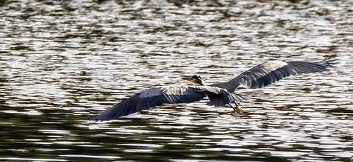 big bird 2-.jpg