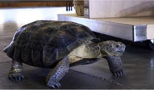 turtle_arizona.jpg
