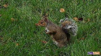 squirrel-6.jpg