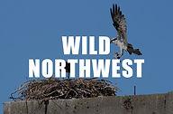 thumbnail_wild northwest.jpg