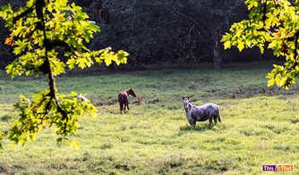 horses 2-1.jpg