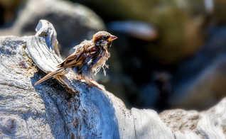 Ruffled Bird