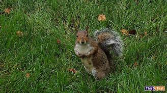 squirrel-5.jpg