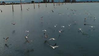Birds_Everett