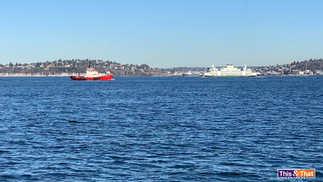 Tugboat-and-Washington-Ferry.jpg
