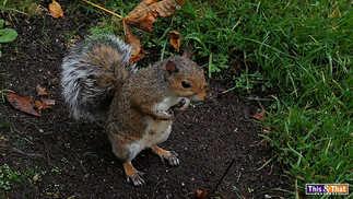 squirrel-1.jpg