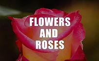 thumbnail_flowers roses.jpg