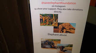 malai_elephant-poster-1.jpg