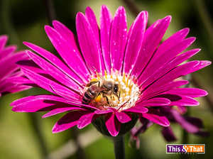 pinkflower bee_sandiegozoo-6844.jpg