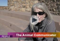 Animal-Communicator-3.jpg