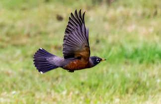bird 1-.jpg