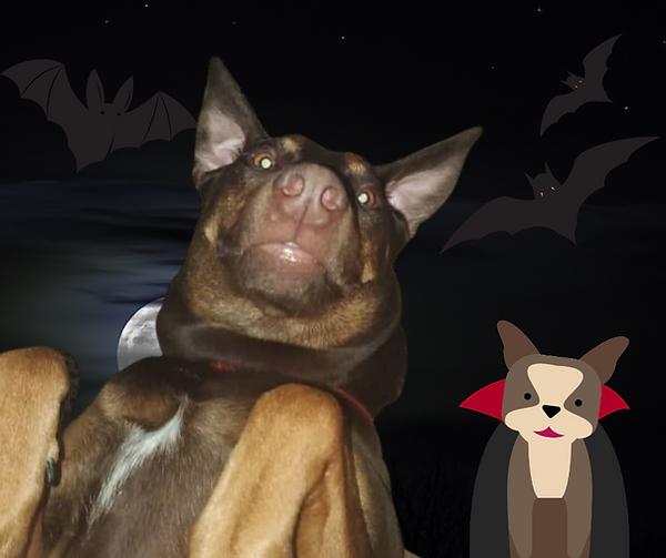VampireDog.png