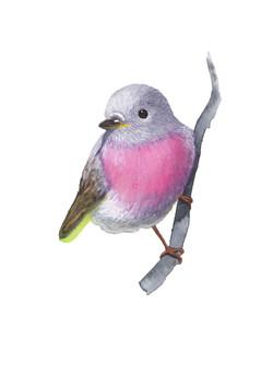 pajaro rosa