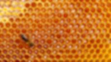terroirs de picardie, miel