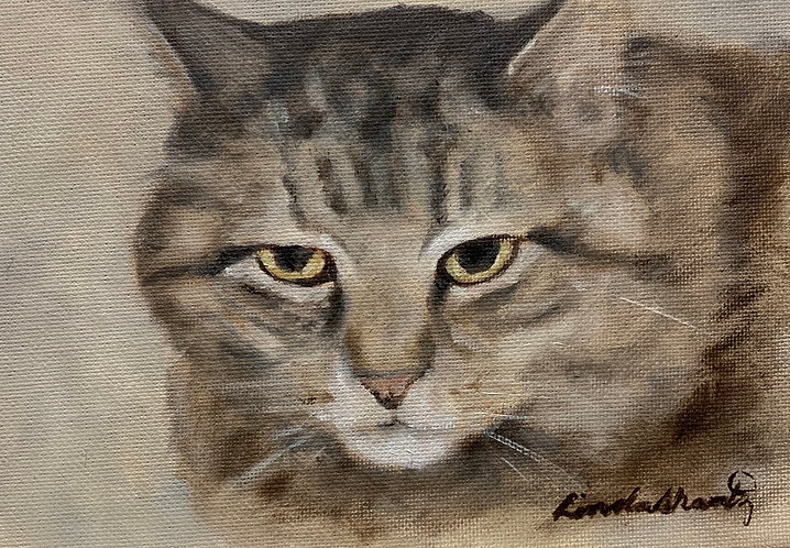 """Grumpy Tabby"" oil sketch"